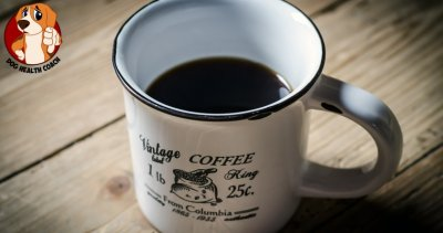 Can dogs drink coffee?