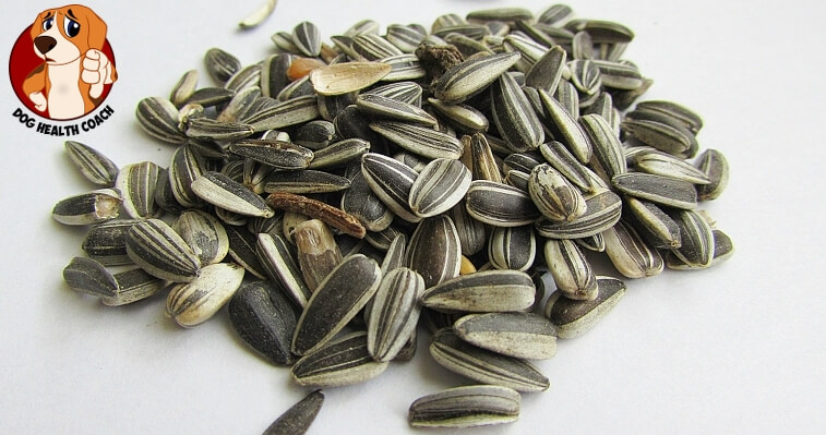 Can Dogs Eat Unsalted Sunflower Seeds
