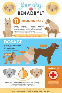 Benadryl for dogs infographic - Pinterest