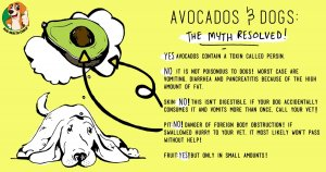 Can dogs eat avocados?