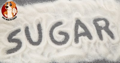 Is sugar bad for dogs