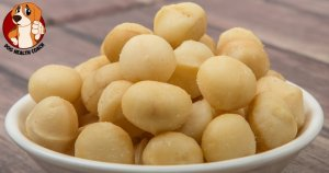 Can Dogs Eat Macadamia Nuts