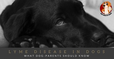 Lyme disease in Dogs