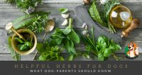 herbs for dogs