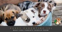 Puppy Parenting 101