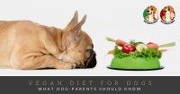 vegan diet for dogs